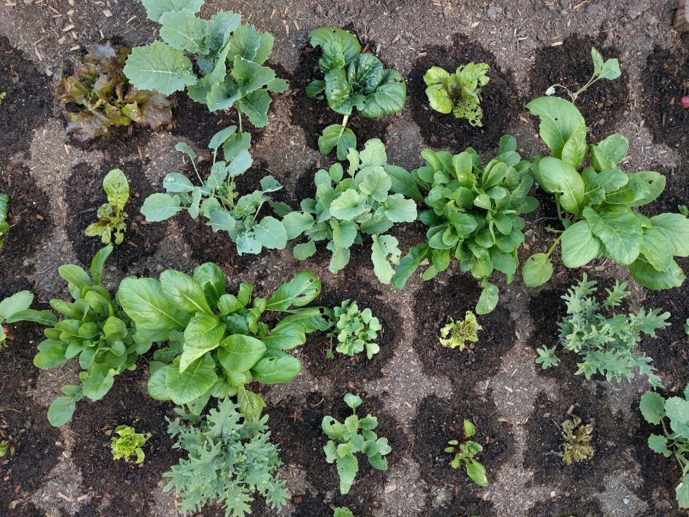 Farmbot food bed example